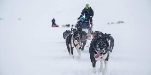 Dog Days in Svalbard